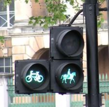 Lumière pour chevaux