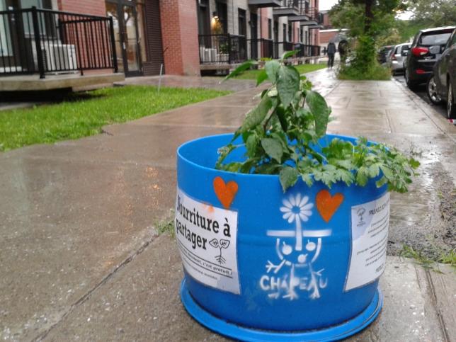 Planter partout