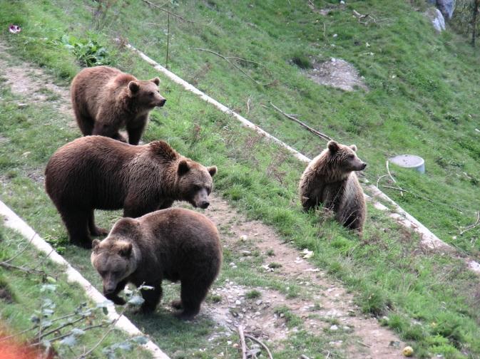 Parc aux Ours de Berne