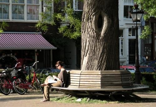 Banc public arbre Amsterdam