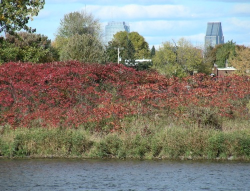 6 Parc des rapides Montréal LaSalle