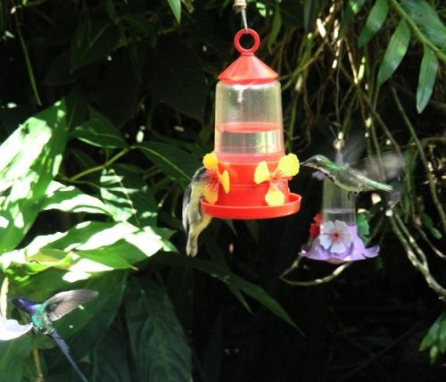 puerto-iguazu-jardin-de-los-picaflores