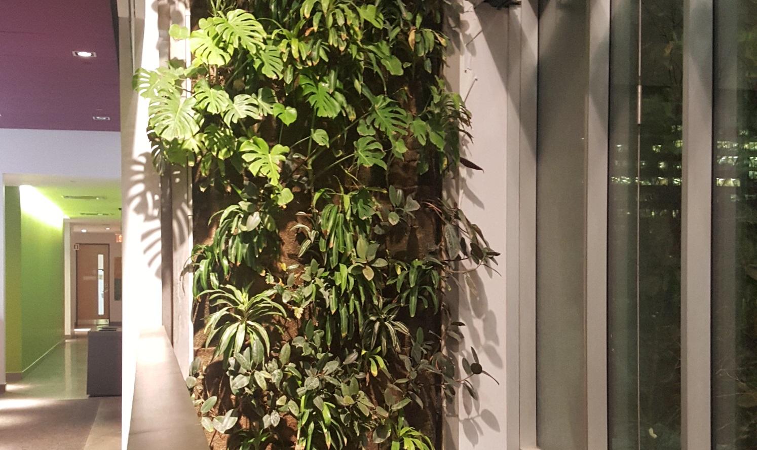 Plantes Pour Mur Végétal Extérieur des murs végétaux pour nos villes – c'est toi ma ville