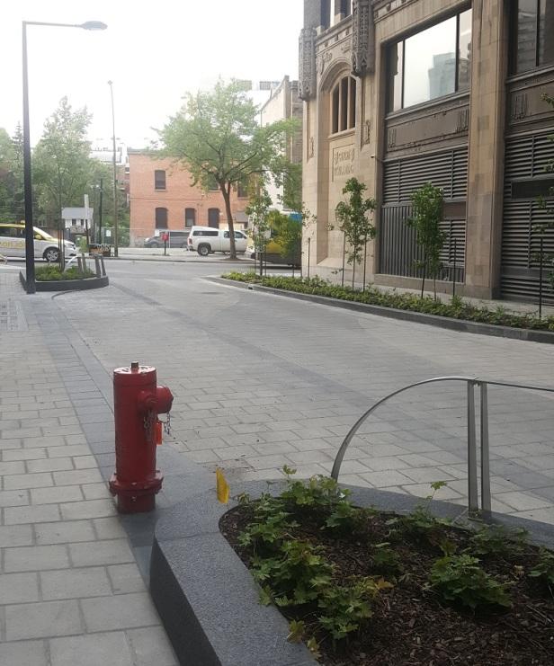 Montréal arbres sur rue (2)