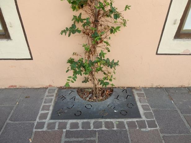 Mulhouse carré de plante grimpante
