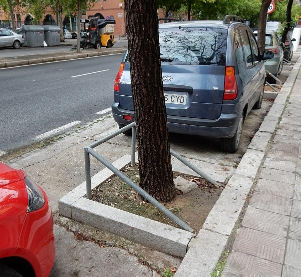 Séville arbre sur rue