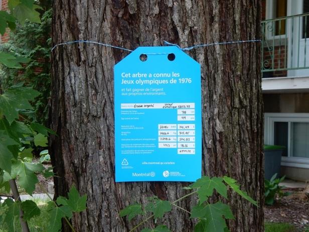 02 Arbres Montréal 16 avenue Rosemont
