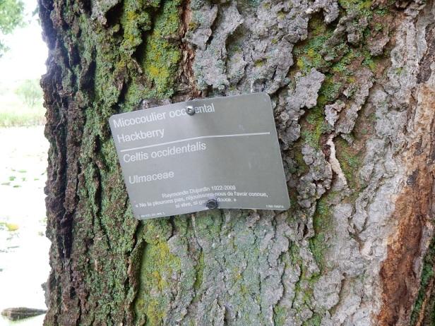 04 Arbres Montréal Jardin botanique
